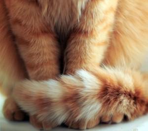 l-Cat-tail
