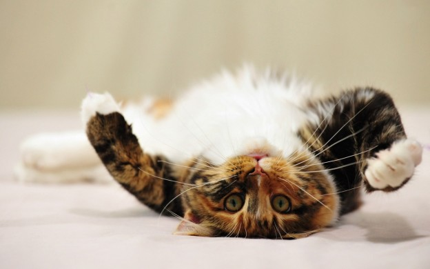 221403-lazy-cat-picture-background-hd-desktop