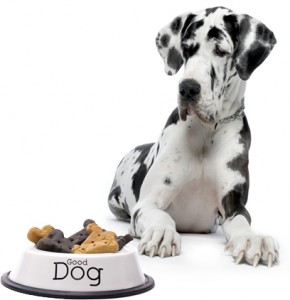 Dog-Food07-290x300