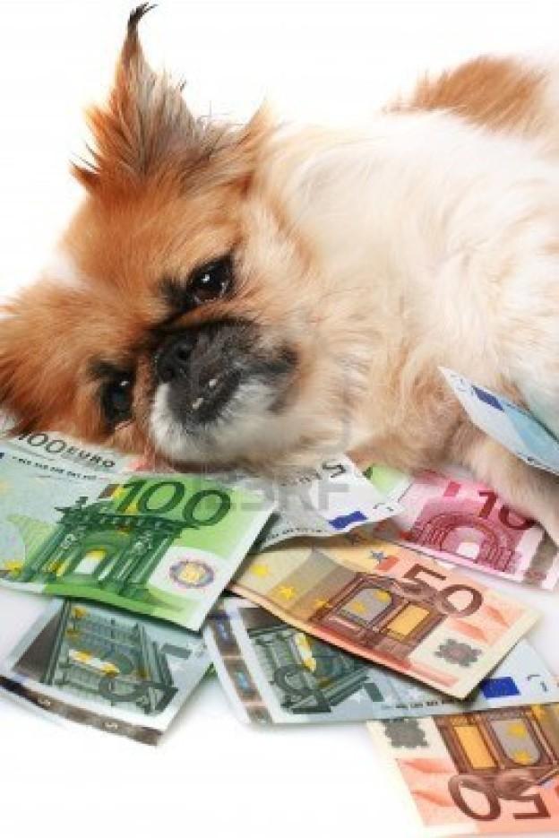 8601106-pequeno-perro-y-dineroes.123rf.com_