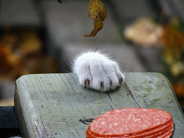 cat-and-food_1-jpg