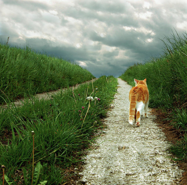 lone-red-and-white-cat-walking-along-grassy-path-axel-lauerer