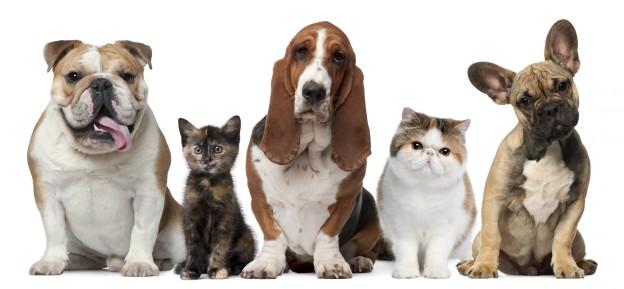 ZoikZit dieren honden en katten